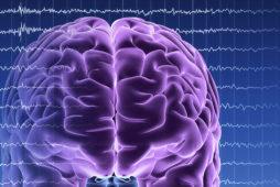 Методы нейропсихологии