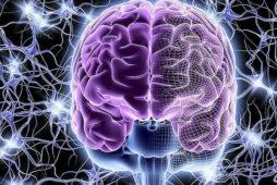 Направления нейропсихологии