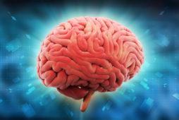 Психосоматика головного мозга